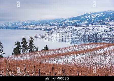 Winter view of Naramata Bench snow covered vineyards with Okanagan Lake and mountains in distance - Stock Photo