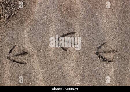Gull footprints by the sand on the beach