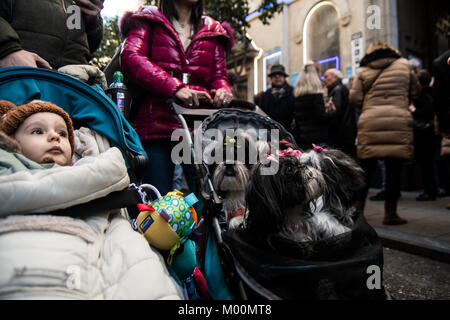 Madrid, Spain. 17th Jan, 2018. Dogs are carried to get blessed in San Anton Church during the celebration of Saint - Stock Photo