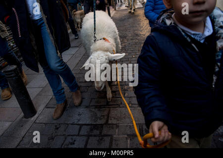 Madrid, Spain. 17th Jan, 2018. Day of San Anton, Patron of the animals in Madrid.17 January 2018 Credit: Gtres Información - Stock Photo