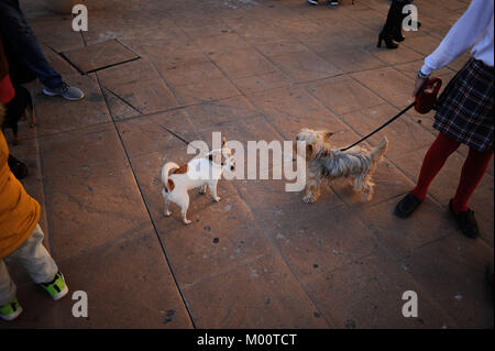 Malaga, Malaga, Spain. 17th Jan, 2018. Two dogs before being blessed by a priest outside San Anton Church in the - Stock Photo