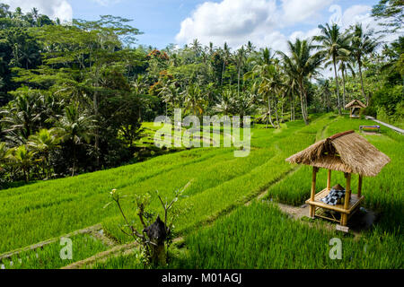 A hut in the middle of rice terraces at Gunung Kawi Temple complex in Tampaksiring, Bali, Indonesia. - Stock Photo
