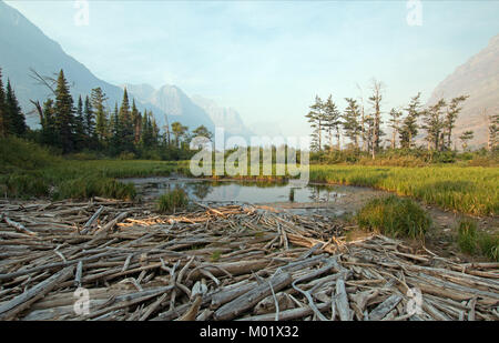 DEAD WOOD AT MARSH POND ON THE SHORES OF SAINT MARY LAKE AT WILD GOOSE ISLAND LOOKOUT POINT IN GLACIER NATIONAL - Stock Photo