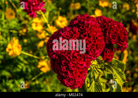 CORDOBA, ANDALUSIA / SPAIN - OCTOBER 14 2017: RED FLOWER - Stock Photo