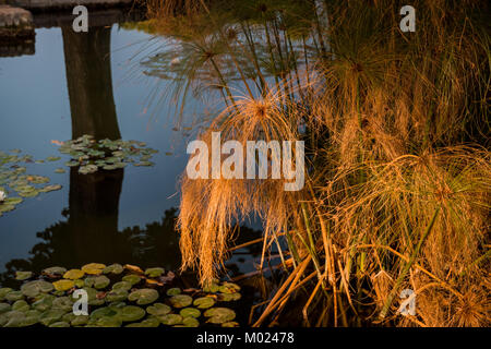 CORDOBA, ANDALUSIA / SPAIN - OCTOBER 14 2017:  GRASS IN WATER - Stock Photo