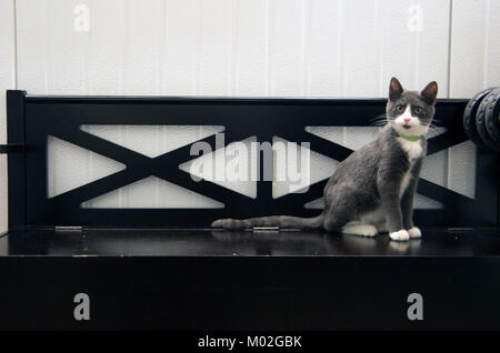 A cat sits on the bench in the animal shelter. - Stock Photo