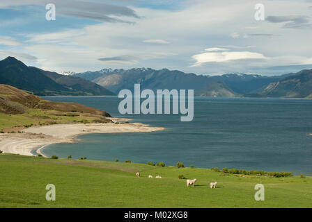 Stunning view of Lake Hawea, with lambs in foreground and blue lake and mountins behind. From State Highway 6, (road - Stock Photo
