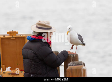 Elderly Street Artist Interacting with a Western Gull - Stock Photo