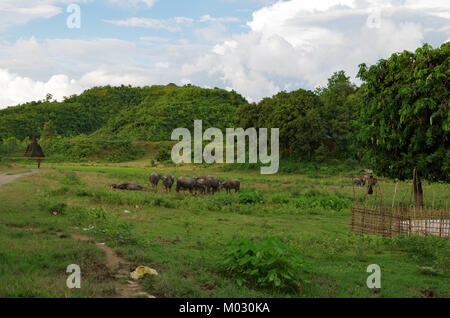 Water buffalos on a green field with a mini pagoda in the background in Mrauk-U, Rakhine State, Myanmar - Stock Photo