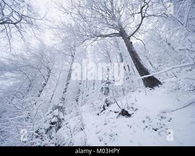 Winter forest while snowing. Snowy trees in dark and misty  winter park. Evening walking trail. - Stock Photo