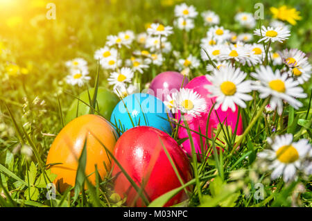 Beautiful view of colorful Easter eggs lying in the grass between daisies and dandelions in the sunshine - Stock Photo