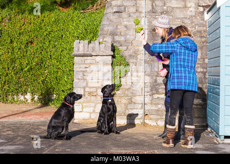Bournemouth, Dorset, UK. 18th Jan, 2018. UK weather:  a lovely sunny day at Bournemouth beach. Obedient dogs, as - Stock Photo