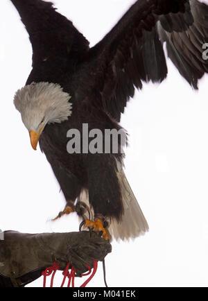 Edinburgh, Scotland. 18th January, 2018. Edinburgh, Scotland, 53rd Wildlife Photographer of the Year Exhibition. - Stock Photo