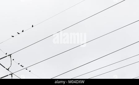 horizontal image of birds on telephone wires - Stock Photo