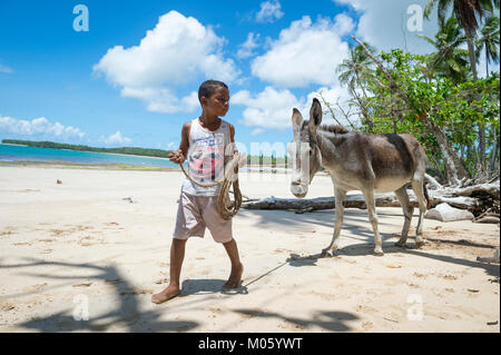 BAHIA, BRAZIL - MARCH 11, 2017: A young Brazilian leads a mule on the palm fringed shore of a beach in the remote - Stock Photo