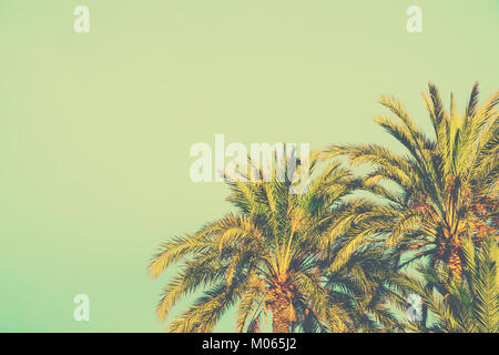 Palm Trees on Toned Light Turquoise Sky Background. 60s Vintage Style Copy Space for Text. Tropical Foliage. Seaside - Stock Photo
