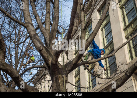 USDA · Contractors from Green Tree Landscaping trim the trees outside the  U.S. Department of Agriculture (USDA - Contractors From Green Tree Landscaping Trim The Trees Outside The