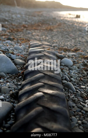 Tractor tyre abandoned to the sea sits on the beach waiting for next high titde - Stock Photo