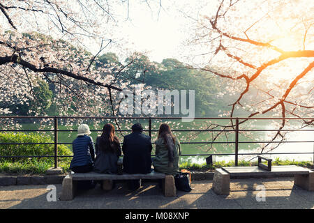 Cherry blossom flowers in garden with many people at Tokyo, Japan. - Stock Photo