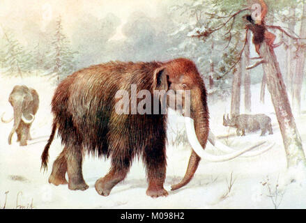 Woolly Mammoth (Mammuthus primigenius), a 1909 illustration by Joseph Smit. - Stock Photo