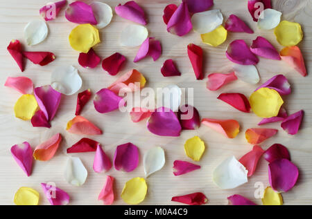 multi colored rose petals scattered on a bright wooden table - Stock Photo