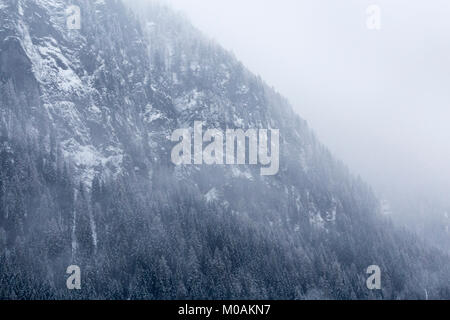 Foggy view of the side of the mountain with snow and snow-tipped conifers clinging to the steep slope. - Stock Photo