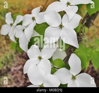 White flowers in garden - Stock Photo