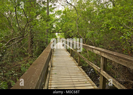 NC01370-00...NORTH CAROLINA - Boardwalk trail through the salt marsh to Currituck Sound in the town of Corrola on - Stock Photo