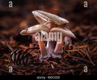 Beautiful Fairytale Woodland Mushrooms - Stock Photo