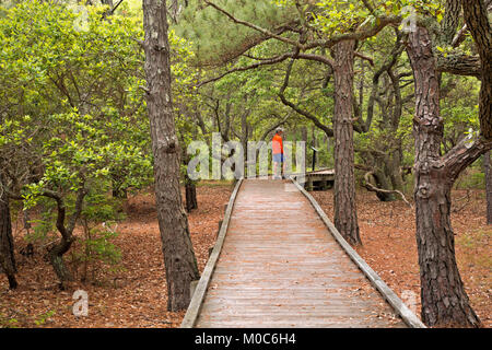 NC01384-00...NORTH CAROLINA - Boardwalk trail through an oak and loblolly pine forest at the Currituck Banks Reserve - Stock Photo