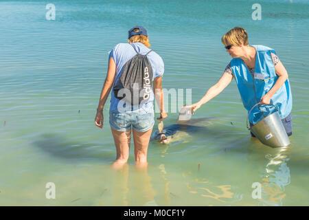 Feeding the dolphins of Monkey Mia - Stock Photo