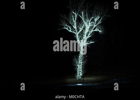 Large tree covered in white christmas lights - Stock Photo