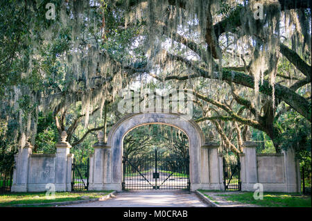 Arched gateway leading to quiet southern country road lined with oak trees with overhanging branches dripping with - Stock Photo