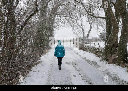 Teesdale, County Durham, UK.  Sunday 21st January 2018. UK Weather.  A woman walks along a country lane as heavy - Stock Photo