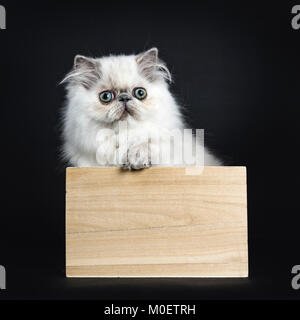 Persian longhair cat / kitten sitting in wooden box isolated on black backgroud with one paw on the edge - Stock Photo