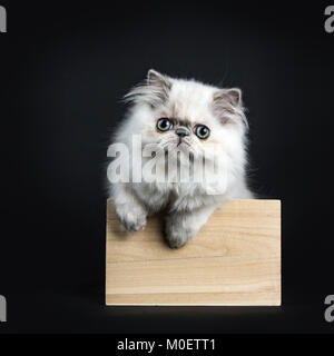 Persian longhair cat / kitten sitting in wooden box isolated on black backgroud with two paws on the edge - Stock Photo
