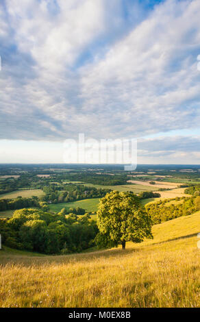 View from the South Downs, South Downs National Park, Plumpton, West Sussex, UK. July - Stock Photo