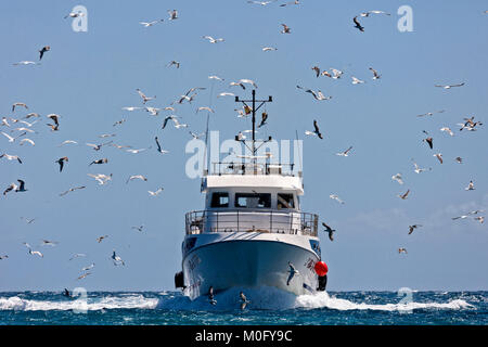 professional fishing boat and seagull turn back port - Stock Photo