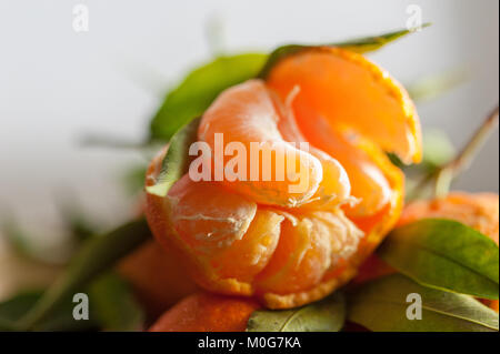 A close-up of a fresh peeled juicy clementine with green leaves on a top of while clementines - Stock Photo