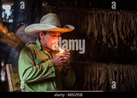 Tobacco farmer in Vinales Valley, Cuba - Stock Photo