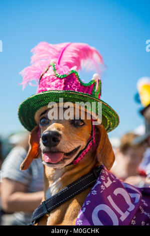 RIO DE JANEIRO - FEBRUARY 19, 2017: A dog wearing a colorful sequined hat celebrates Carnival at the annual Blocão - Stock Photo