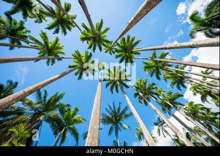 Avenue of tall royal palm trees soar into bright blue tropical sky in Rio de Janeiro, Brazil - Stock Photo