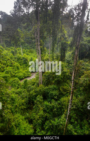 Tall trees in primary rainforest at Danum Valley Conservation Area, Borneo, Sabah, Malaysia - Stock Photo
