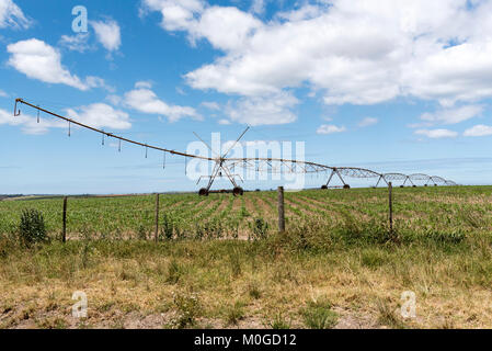 Blanco George Western Cape South Africa. December 2017. Irrigation sprinkler watering crops on a farm in the Blanco - Stock Photo