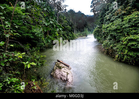 View of the Danum River flowing through primary rainforest, Danum Valley Conservation Area, Borneo, Sabah, Malaysia - Stock Photo