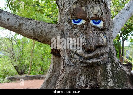 Large blue eyes and face on a tree, Billy the bombax tree, Anderson Park Botanic Gardens, Townsville, Queensland, - Stock Photo