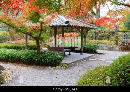 Autumn foliage in Japan - red momiji leaves (maple tree) in a Japanese tea garden of Yoshikien, Nara, Japan. - Stock Photo