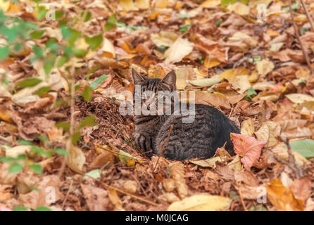 Adorable lonely homeless cat in the season autumn leaves