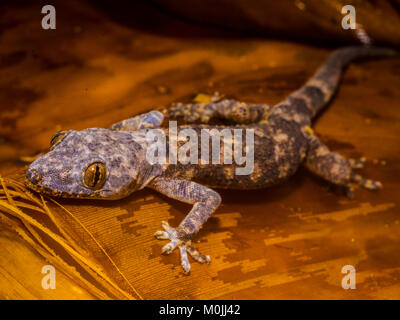 A gecko resting on a leaf. - Stock Photo