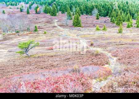 Autumn lush foliage landscape with one single tree with colorful open vast meadow, trail path dirt road in Dolly - Stock Photo
